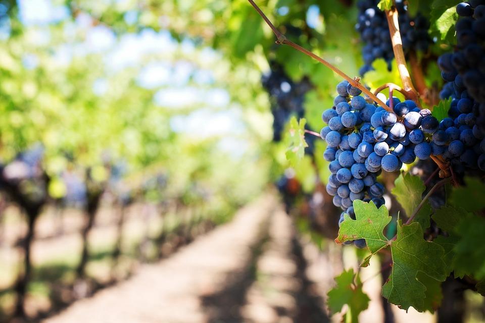 wine-routes